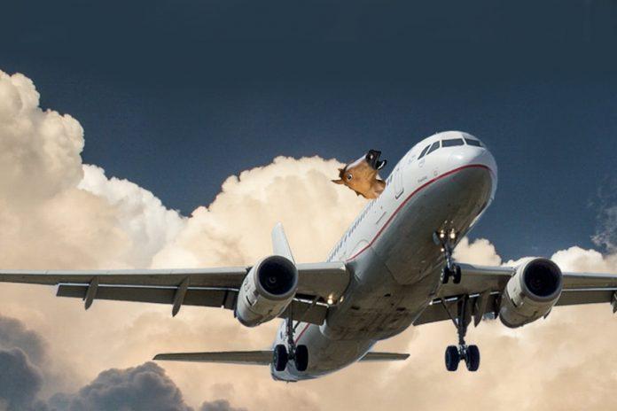kon-w-samolocie